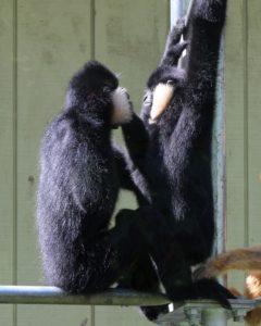 Monkeys